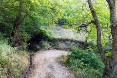 Camino de tierra a través del bosque de la montaña Foto de archivo