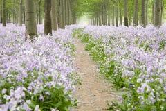 Camino de tierra a través del campo de flor Foto de archivo libre de regalías