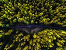 Camino de tierra vacío en un bosque en la puesta del sol fotos de archivo libres de regalías