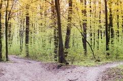 Camino de tierra vacío que parte en dos, concepto para las opciones de la vida Fotos de archivo libres de regalías