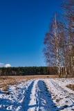 Camino de tierra y abedul nevados en invierno Foto de archivo