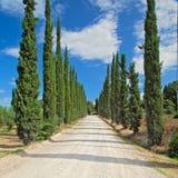 Camino de tierra y cipreses en Toscana, Italia Fotografía de archivo libre de regalías