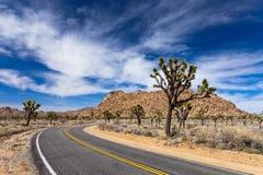 Camino del árbol de Joshua Foto de archivo