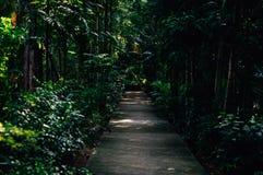Camino del árbol grande por la tarde fotos de archivo