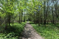 Camino del arbolado en la primavera temprana, Dorset, Reino Unido fotografía de archivo libre de regalías