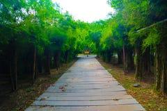 Camino del bambú hermoso de la naturaleza y del bosque y del túnel del árbol en los parques públicos fotografía de archivo libre de regalías
