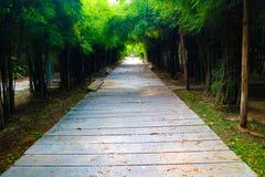 Camino del bambú hermoso de la naturaleza y del bosque y del túnel del árbol en los parques públicos foto de archivo libre de regalías