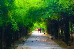 Camino del bambú hermoso de la naturaleza y del bosque y del túnel del árbol en los parques públicos imagen de archivo libre de regalías