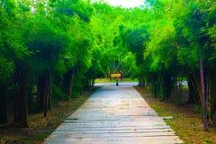 Camino del bambú hermoso de la naturaleza y del bosque y del túnel del árbol en los parques públicos imagenes de archivo