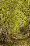 Camino del bosque Imagen de archivo libre de regalías