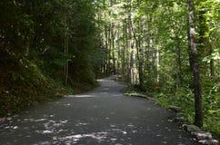 Camino del bosque Fotografía de archivo libre de regalías