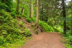 Camino del bosque Imagen de archivo