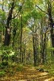 Camino del bosque del otoño Imagen de archivo