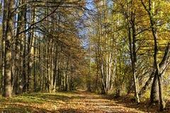 Camino del bosque del otoño Fotografía de archivo libre de regalías