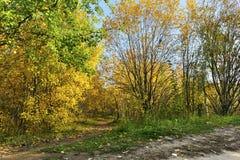 Camino del bosque del otoño Imagen de archivo libre de regalías