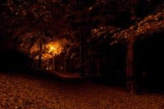 Camino del bosque en la noche Imágenes de archivo libres de regalías