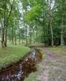 Camino del bosque junto a una corriente Imágenes de archivo libres de regalías