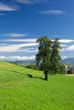 Camino del campo, árbol solo, cielo, montañas Imagen de archivo