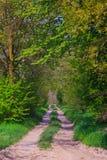 Camino del campo Imagen de archivo libre de regalías