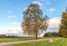 Camino del campo con el árbol de abedul solo Foto de archivo