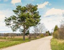 Camino del campo con el pino solo y las nubes que flotan a través del cielo Imágenes de archivo libres de regalías