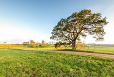 Camino del campo con el pino y el molino de viento solos en horizonte Imagenes de archivo