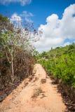 Camino del campo en la isla de Itamaraca - Pernambuco, el Brasil imagen de archivo
