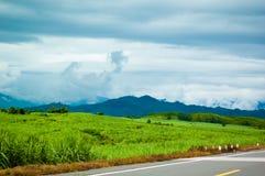 Camino del campo entre los prados verdes Imagenes de archivo
