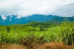Camino del campo entre los prados verdes Foto de archivo