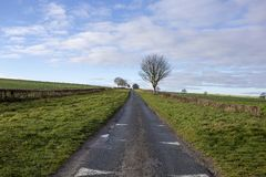 Camino del carril del país que lleva en horizonte con el árbol foto de archivo