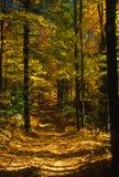 Camino del color del otoño Imagen de archivo libre de regalías