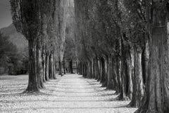 Camino del darck de la hoja Fotos de archivo