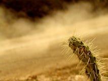 Camino del desierto Imagen de archivo