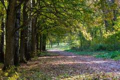 Camino del desierto en el bosque del otoño Foto de archivo