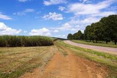Camino del distrito de la bobina flanqueado por Sugar Cane Field imagen de archivo libre de regalías