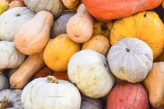 Camino del fondo de la decoración de los productos del otoño de las calabazas Foto de archivo libre de regalías