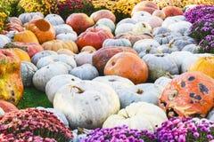 Camino del fondo de la decoración de los productos del otoño de las calabazas Fotos de archivo