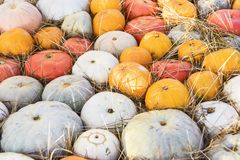 Camino del fondo de la decoración de los productos del otoño de las calabazas Imagen de archivo