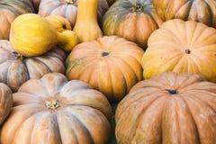 Camino del fondo de la decoración de los productos del otoño de las calabazas Fotografía de archivo libre de regalías