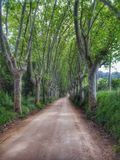 Camino del infinito Fotografía de archivo libre de regalías