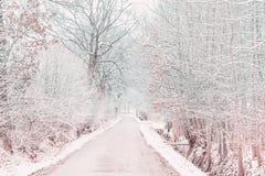 Camino del invierno Foto de archivo libre de regalías