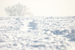 Camino del invierno imagen de archivo