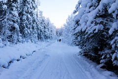 Camino del invierno Fotos de archivo
