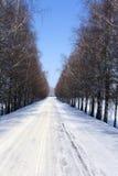 Camino del invierno abedul Imagen de archivo libre de regalías