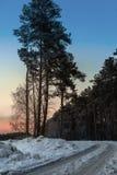 Camino del invierno cerca de la última hora de la tarde del bosque foto de archivo