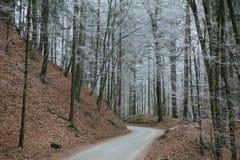 Camino del invierno en bosque Fotos de archivo