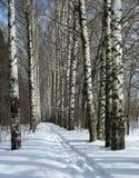 Camino del invierno en callejón del abedul Fotografía de archivo