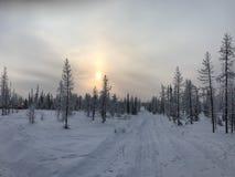 Camino del invierno en el bosque imagenes de archivo