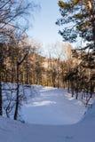 Camino del invierno en el bosque Fotografía de archivo
