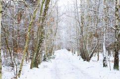 Camino del invierno en el bosque cubierto con nieve Imágenes de archivo libres de regalías